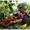 Maalwerk koffie Colombia Supremo